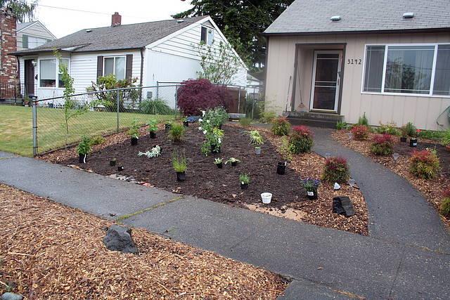 Photos Going Grassless In My Front Yard Kevinfreitas Net